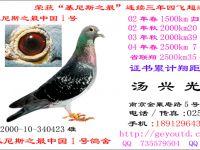 基尼斯之最中国一号鸽舍