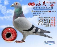 北京鸿昊赛鸽公棚第四关500公里第3名