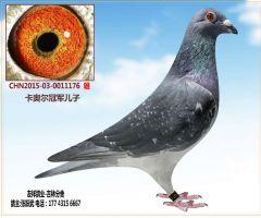 CHN2015-03-0011176