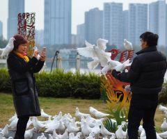 图虫摄影:东湖公园的鸽子